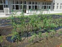 農園作業1