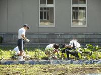 農園作業2
